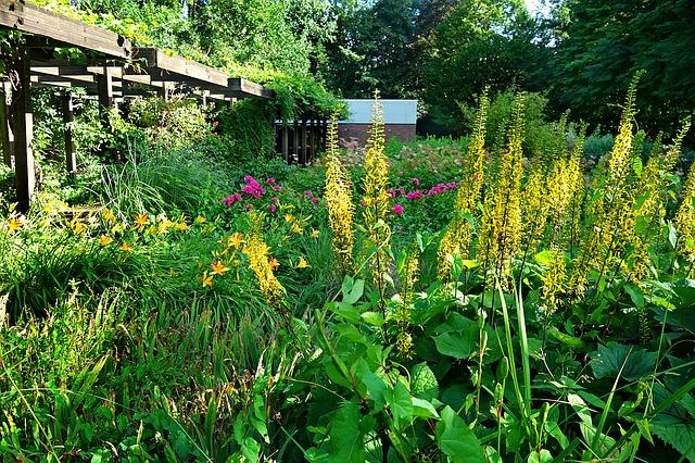 zarostlá zahrada